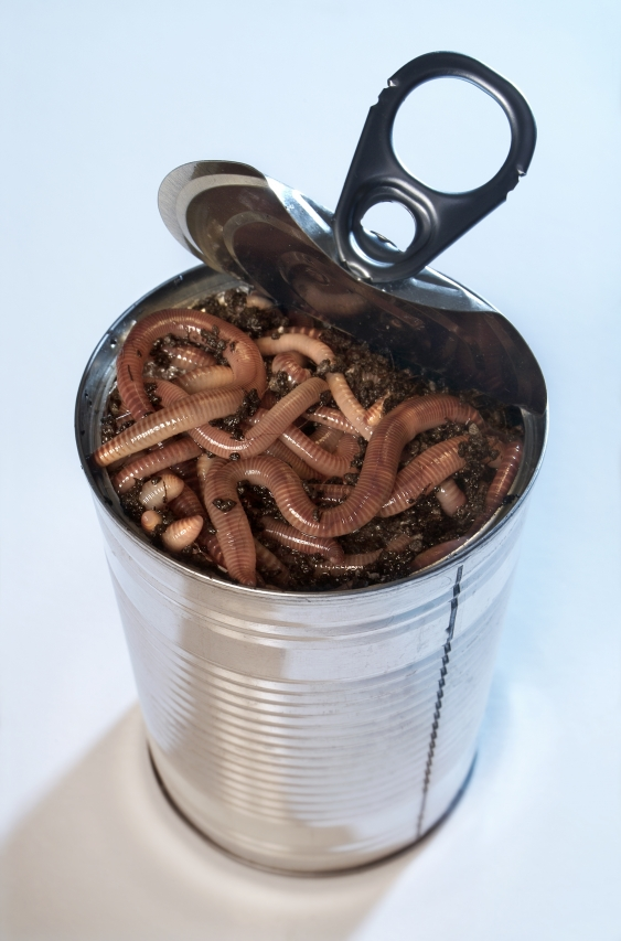 istock_can-of-worms.jpg