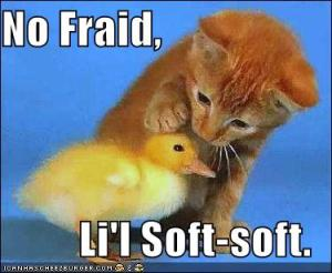 funny-pictures-kitten-comforts-chick