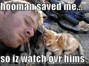 funny-pictures-kitten-watches-over-soldier