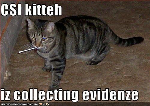 funny-pictures-csi-cat-collects-evidence1