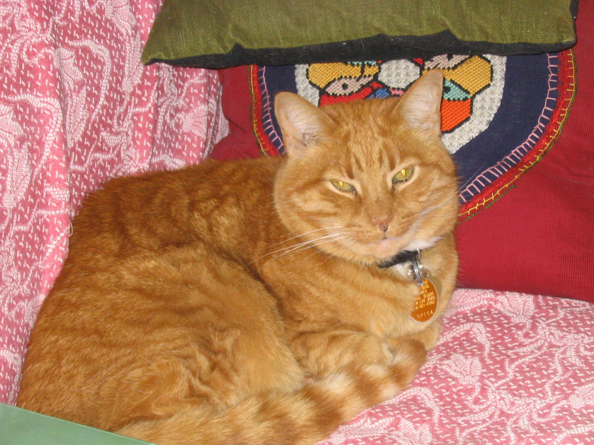 Its friday cat pictures it s friday so it s time for - It S Friday So It S Time For Sappy Cat Blogging Tinker On A Soft Sofa